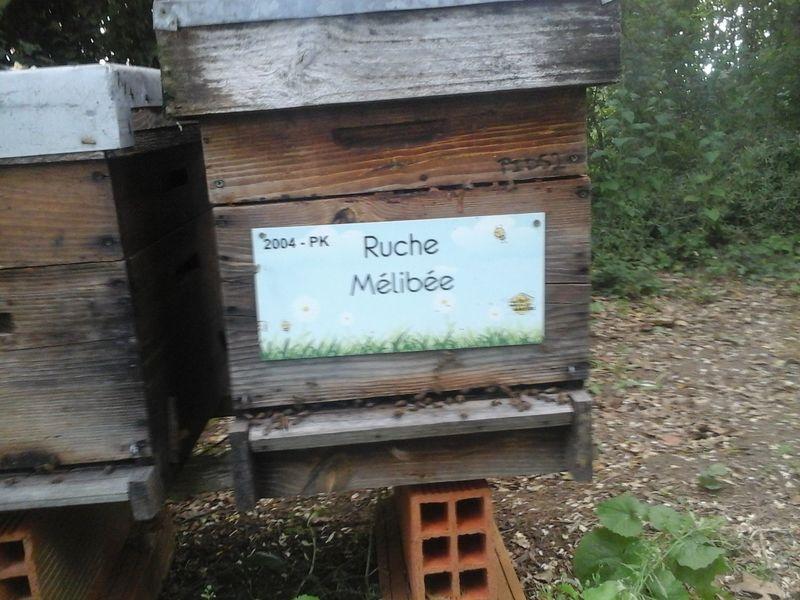 La ruche Mélibée