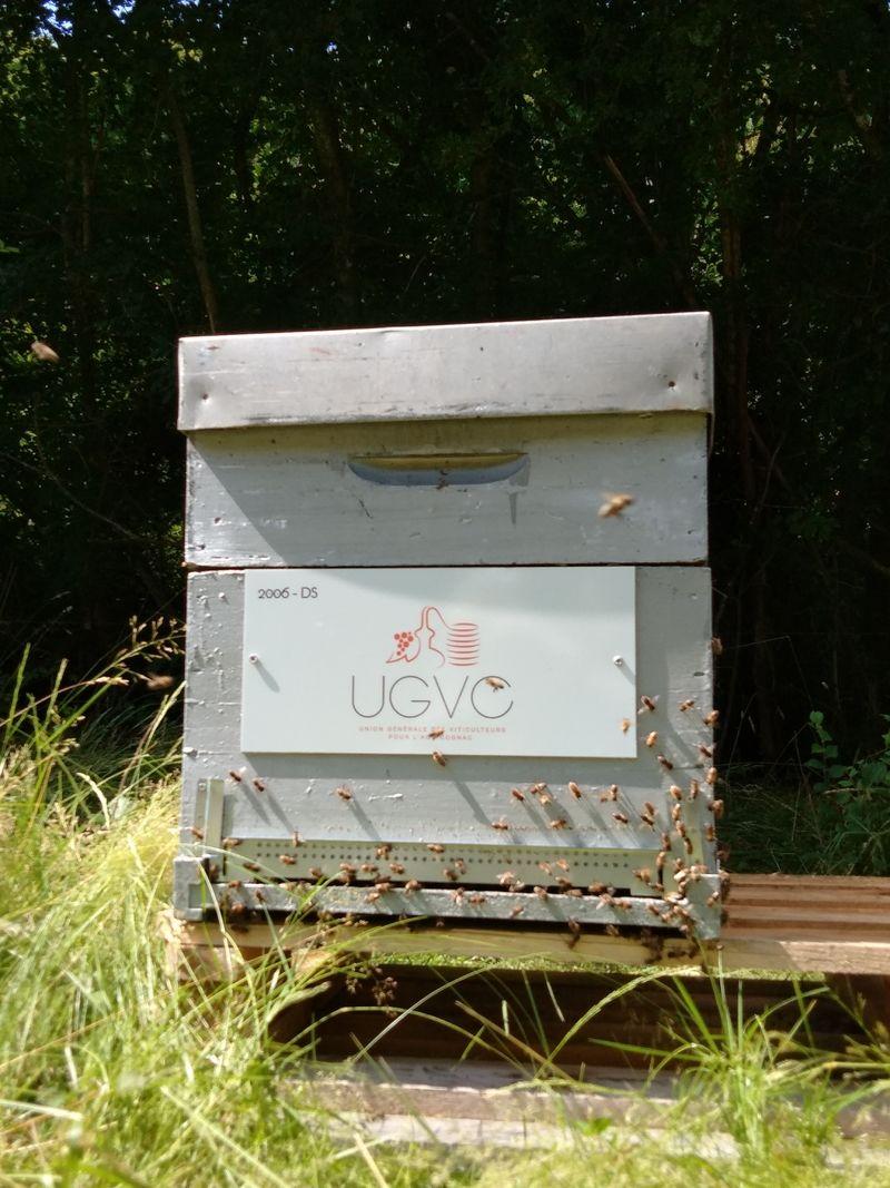 La ruche UGVC