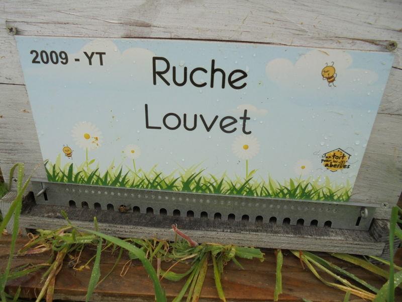 La ruche Louvet