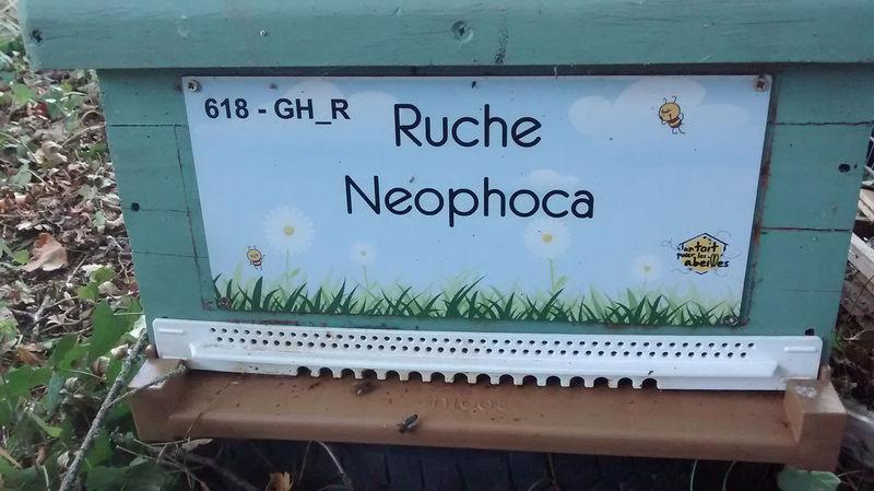 La ruche Neophoca
