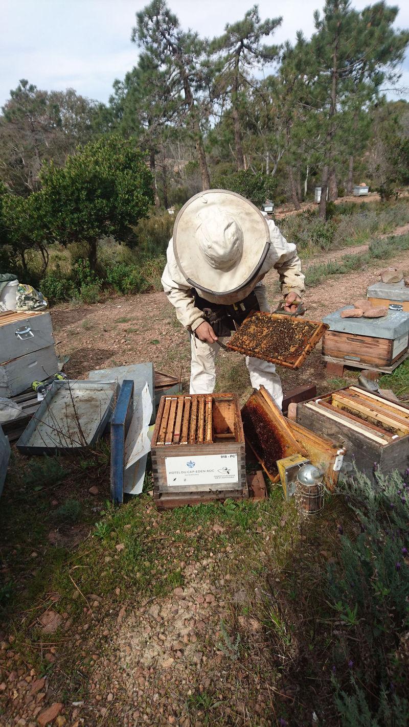 La ruche Hôtel du Cap-Eden-Roc