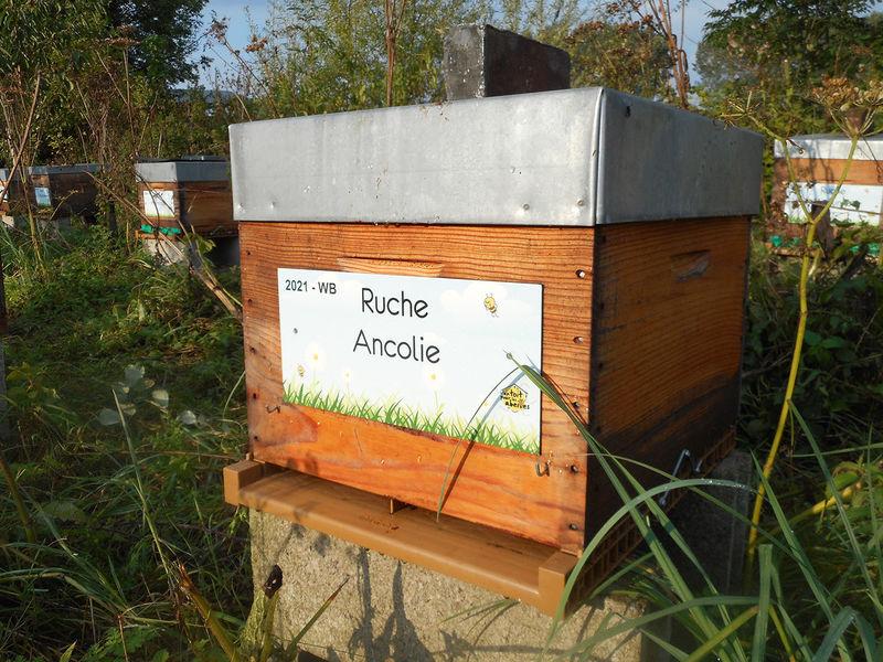 La ruche Ancolie