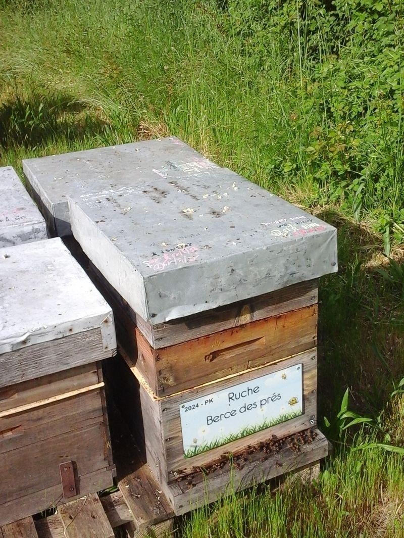 La ruche Berce des prés