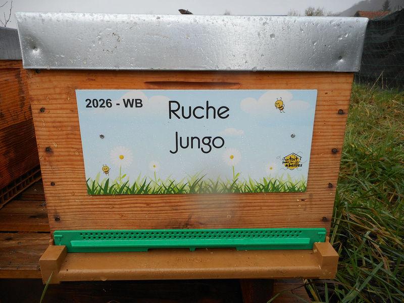 La ruche Jungo
