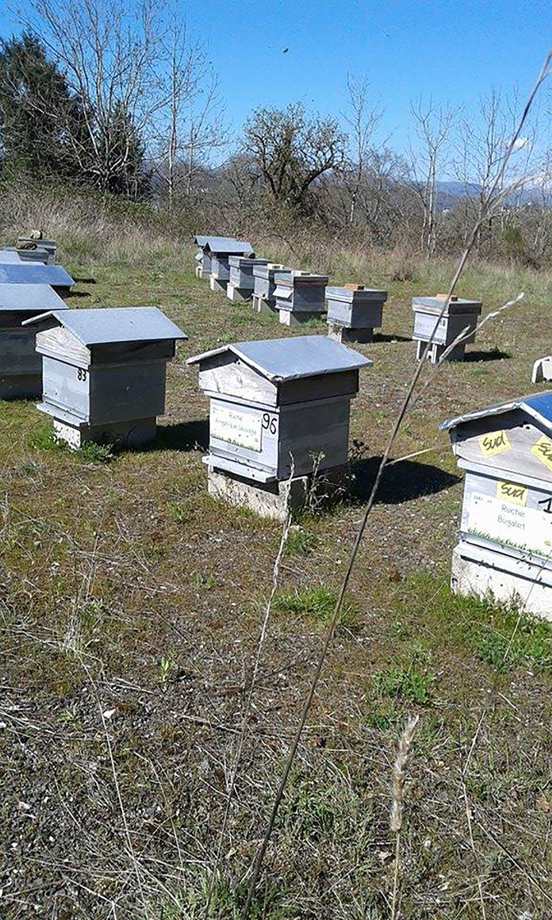 La ruche Angélique Sauvage