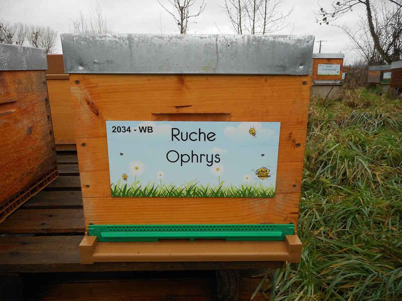 La ruche Ophrys