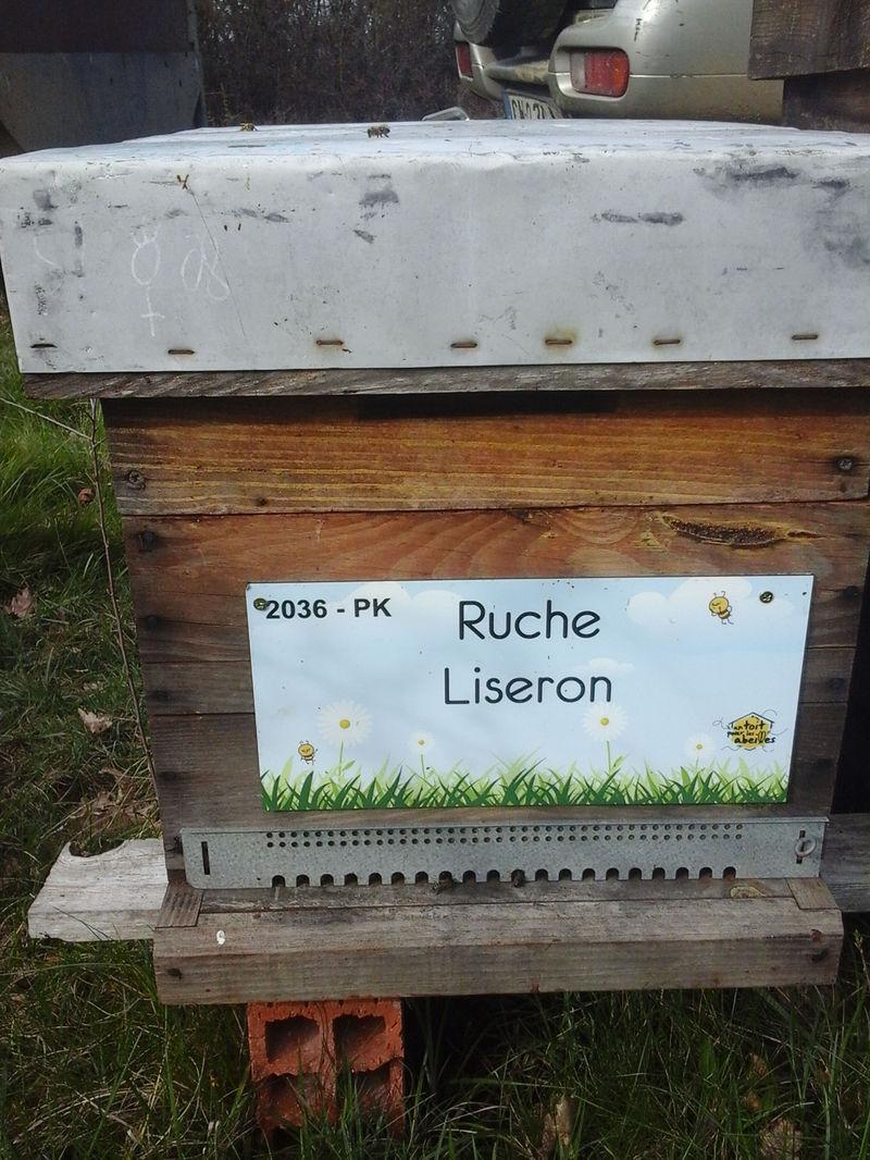 La ruche Liseron