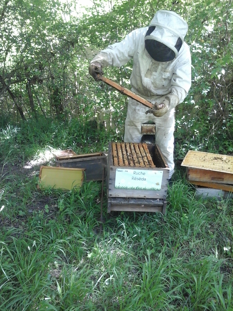 La ruche Réséda