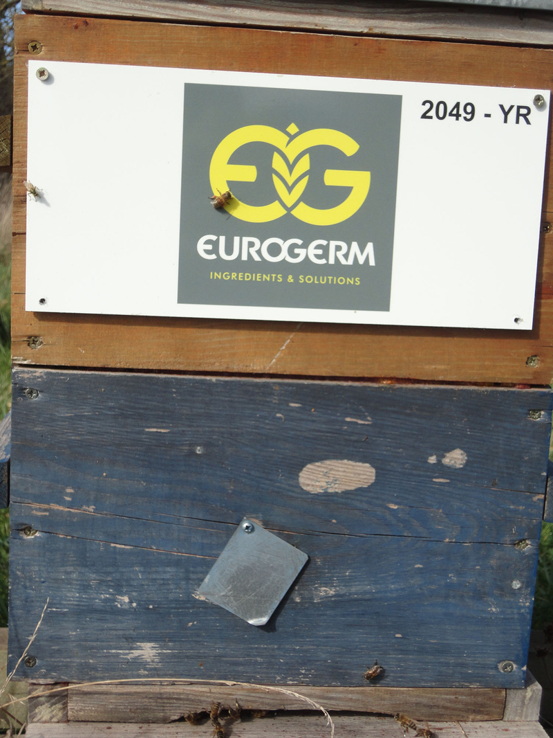 La ruche EUROGERM