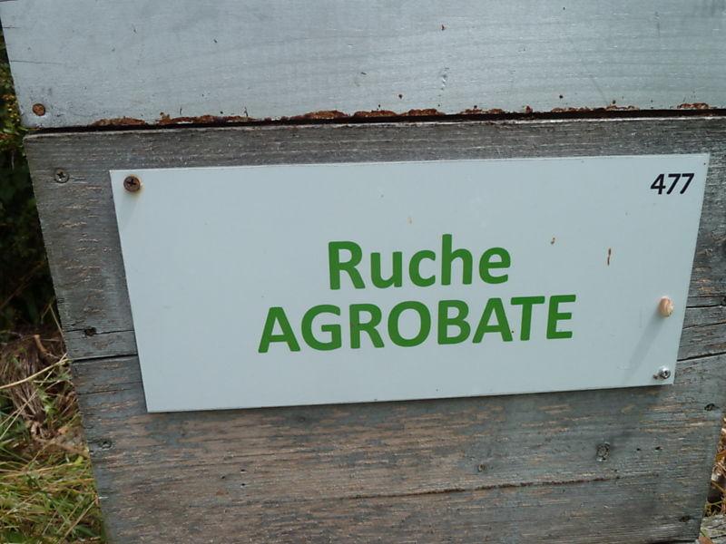 La ruche Agrobate