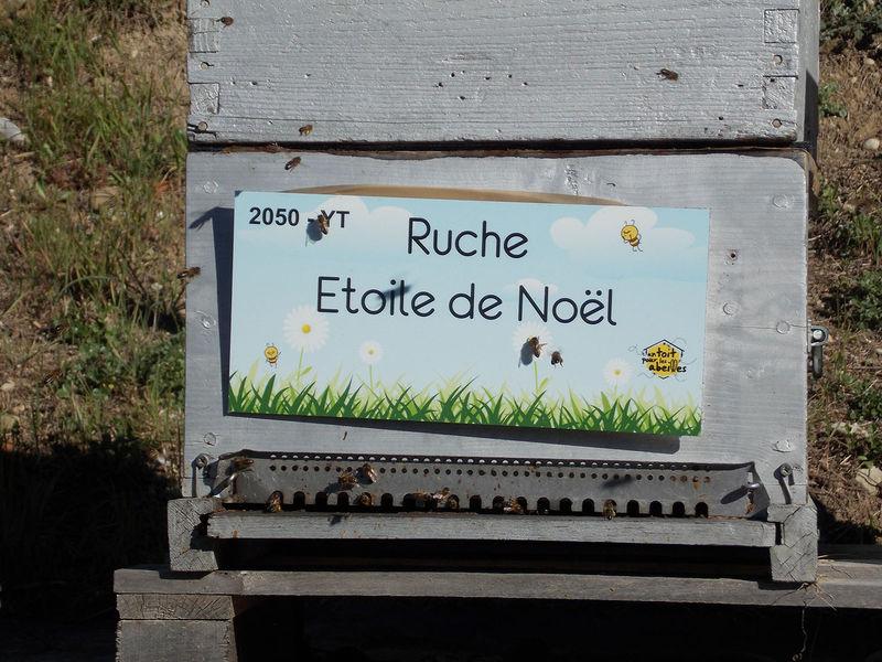 La ruche Etoile de Noel