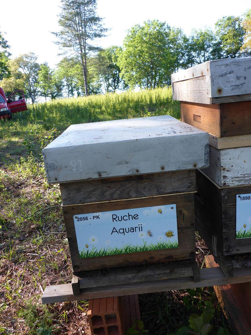 La ruche Aquarii