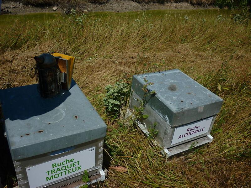 La ruche Traquet motteux