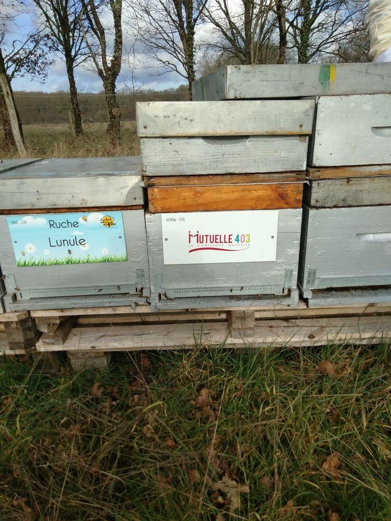 La ruche MUTUELLE 403
