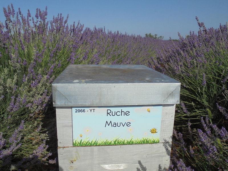 La ruche Mauve