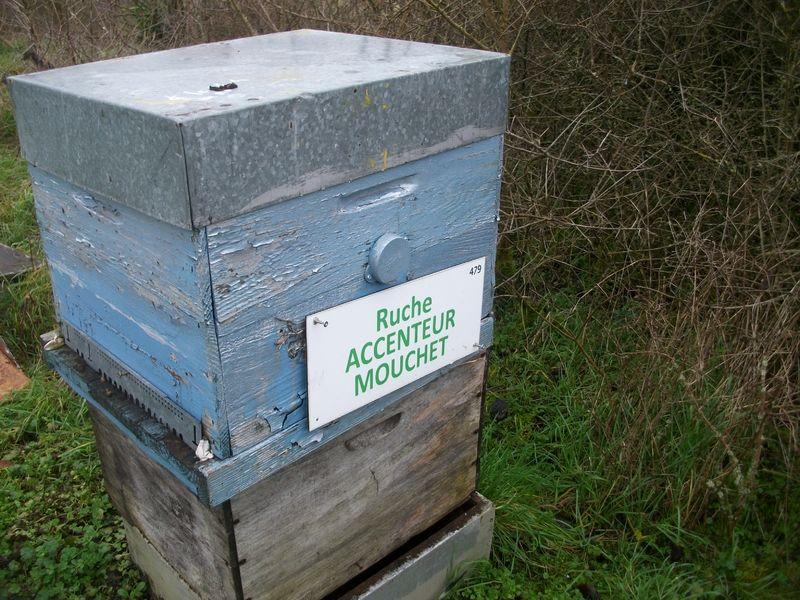 La ruche Accenteur mouchet