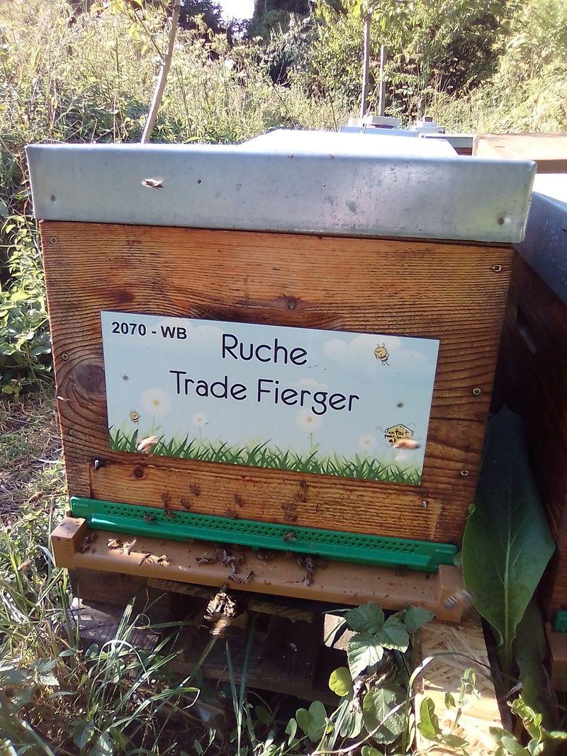 La ruche Trade Fierger