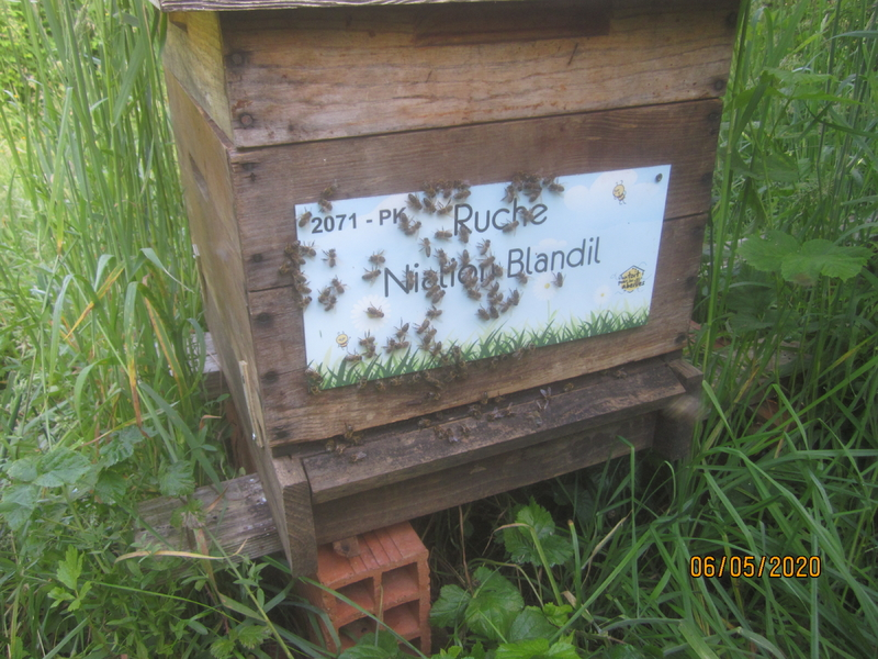 La ruche Nialion Blandil