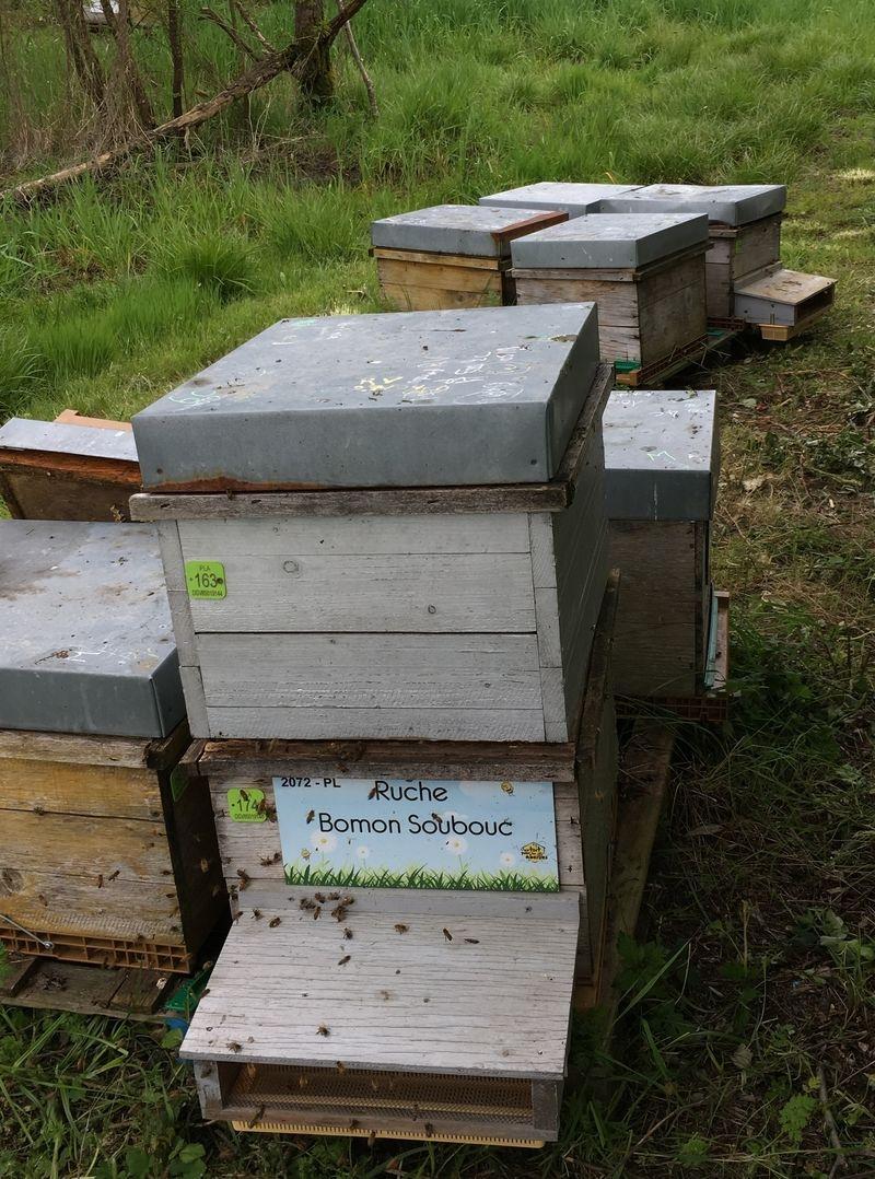 La ruche Bomon Soubouc