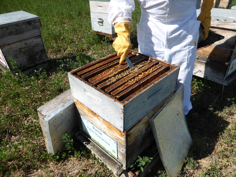 La ruche Pelin Touracine