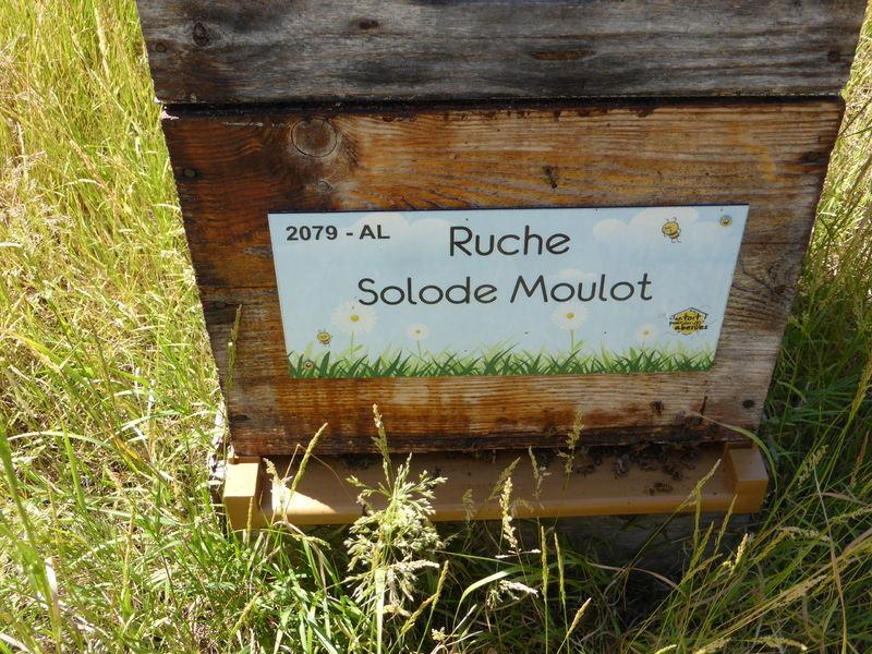 La ruche Solode Moulot