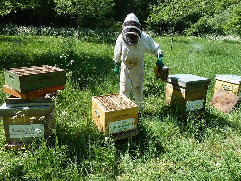 La ruche Bergeronnette grise