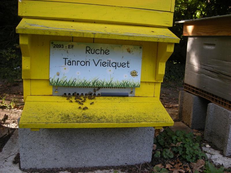 La ruche Tanron Vieilquet