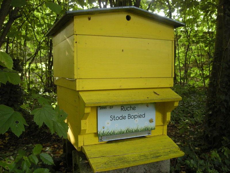 La ruche Stode Bopied