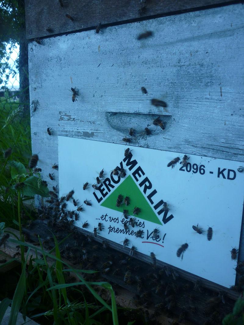 La ruche LEROY MERLIN CHOLET