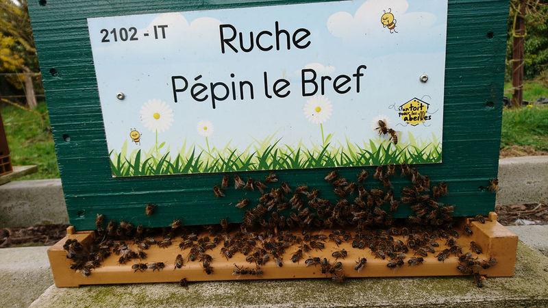 La ruche Pépin le Bref