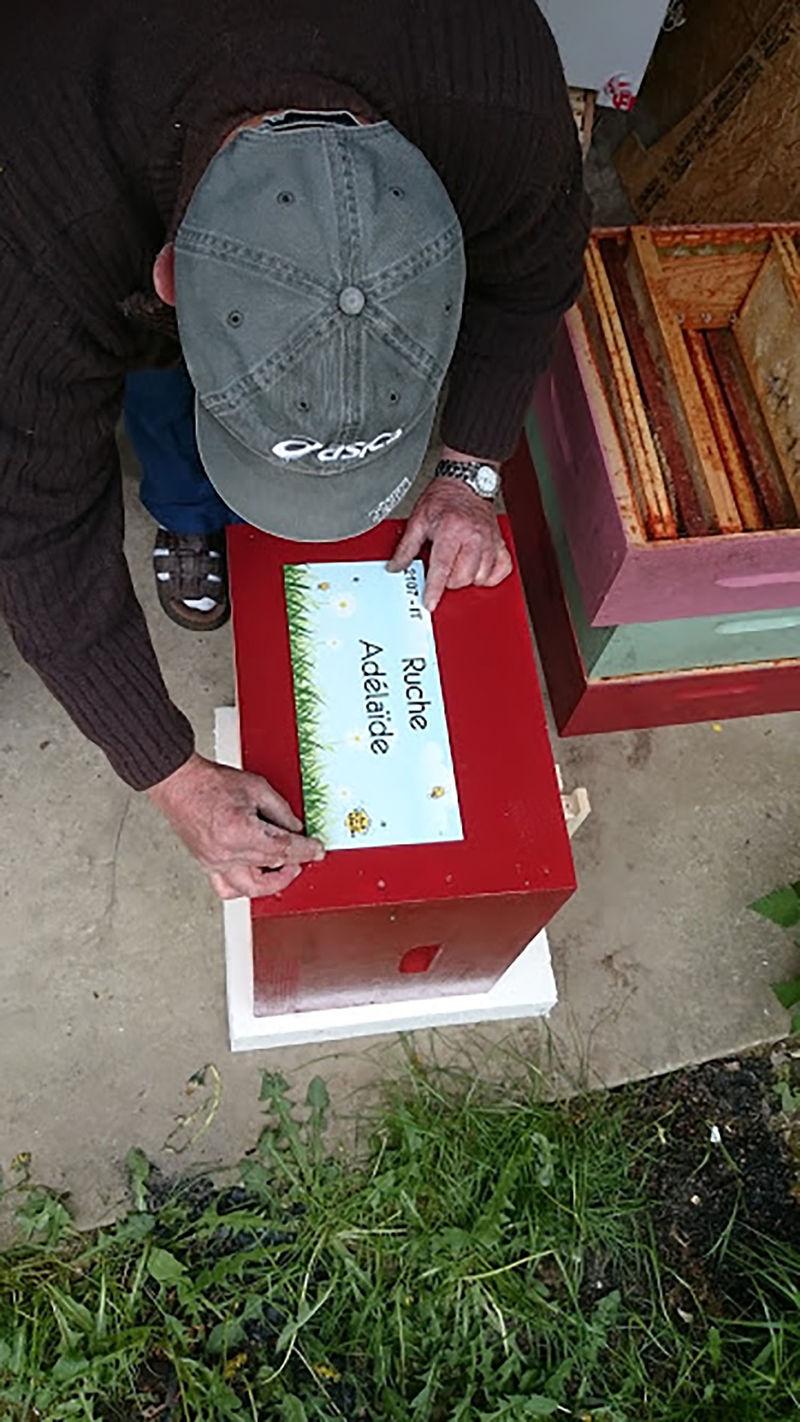 La ruche Adélaïde