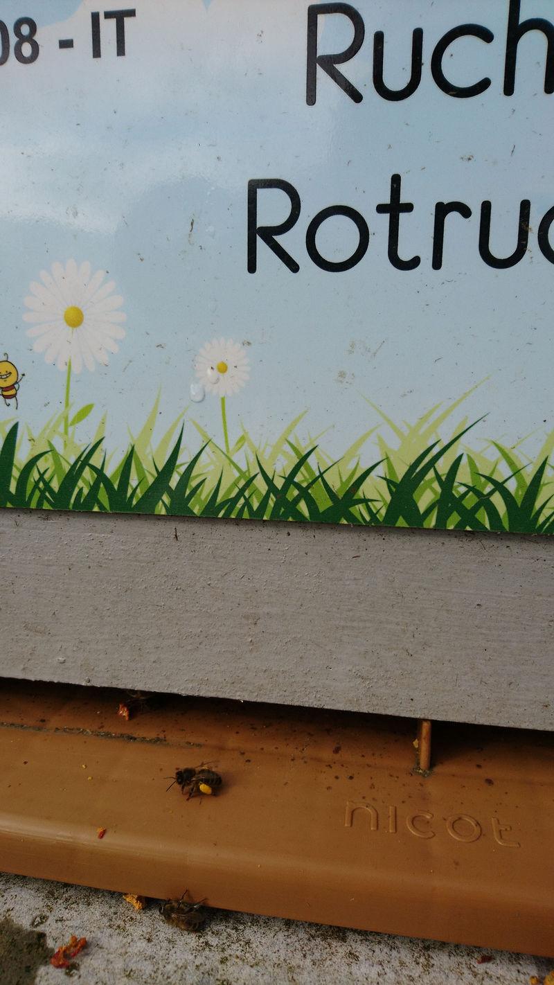 La ruche Rotrude