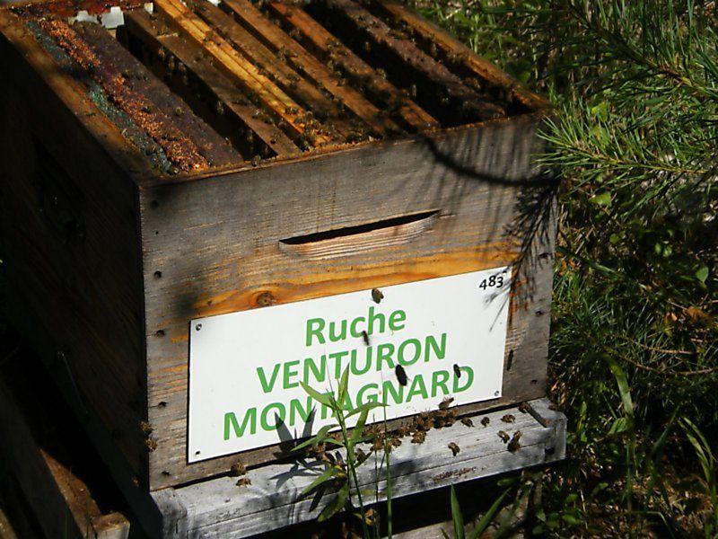 La ruche Venturon montagnard