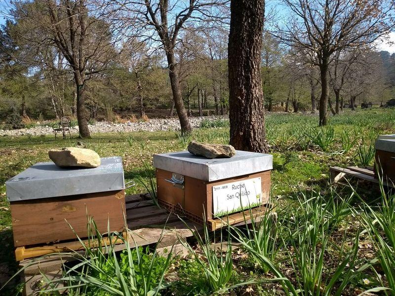 La ruche San Quilico