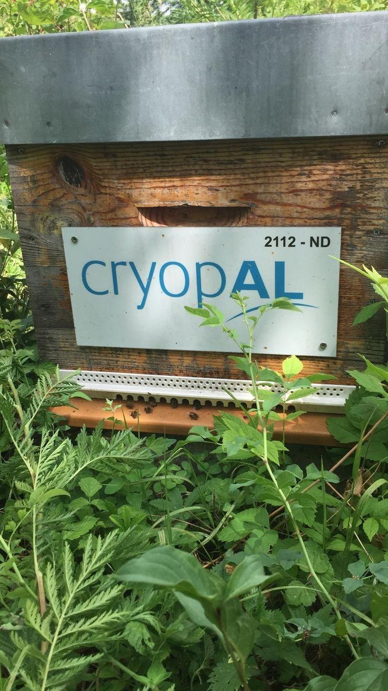 La ruche CE CRYOPAL