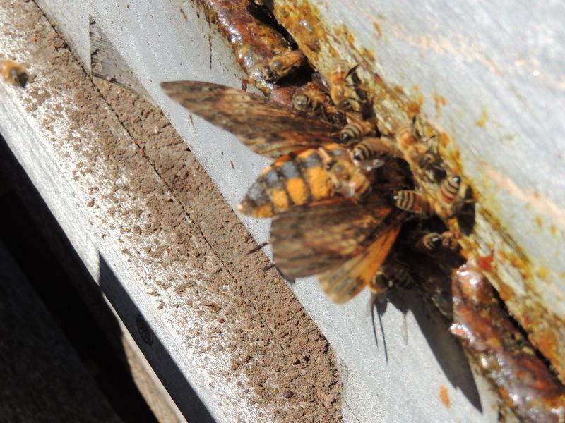 La ruche SONNEDIX ISTRE SULAUZE