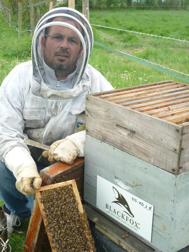 La ruche Blackfox