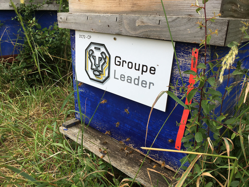 La ruche GROUPE LEADER