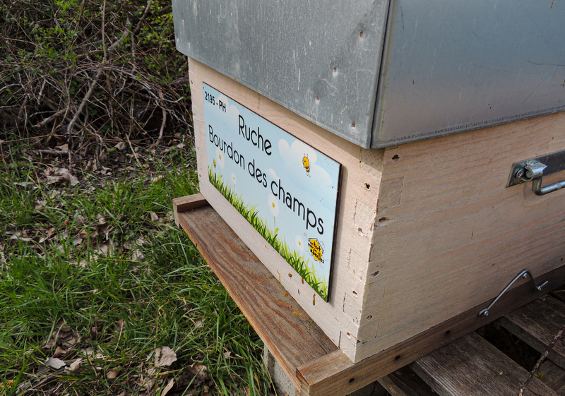 La ruche Bourdon des champs