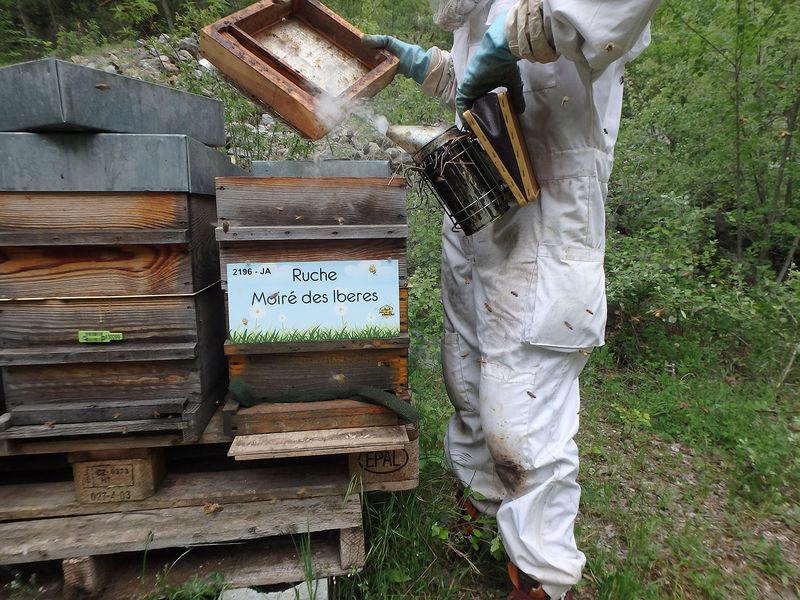 La ruche Moiré des Iberes