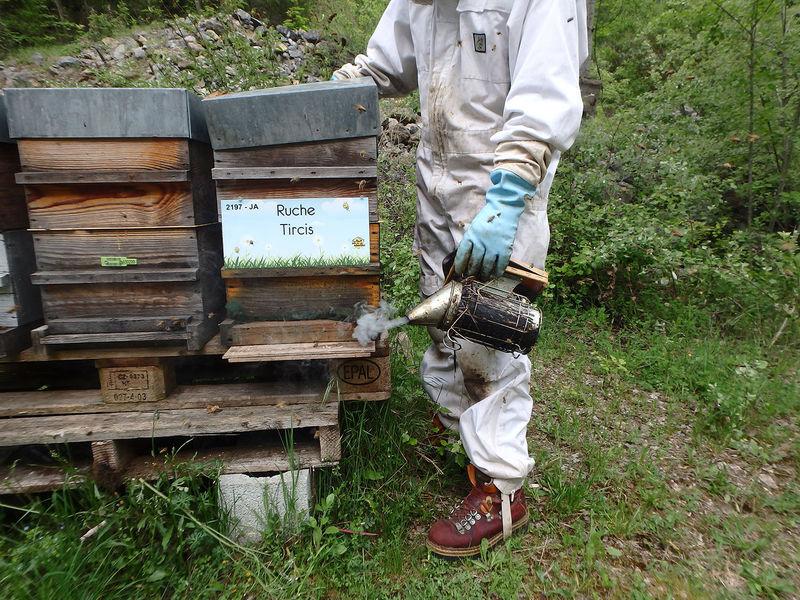 La ruche Tircis