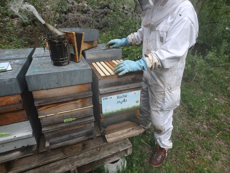La ruche Myrtil