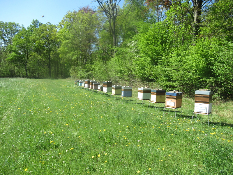 La ruche Cardère
