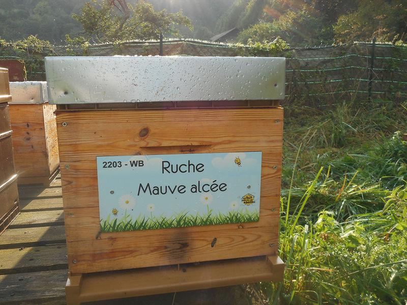 La ruche Mauve alcée