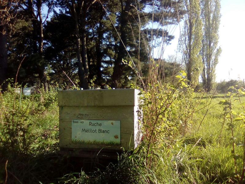 La ruche Mélilot Blanc
