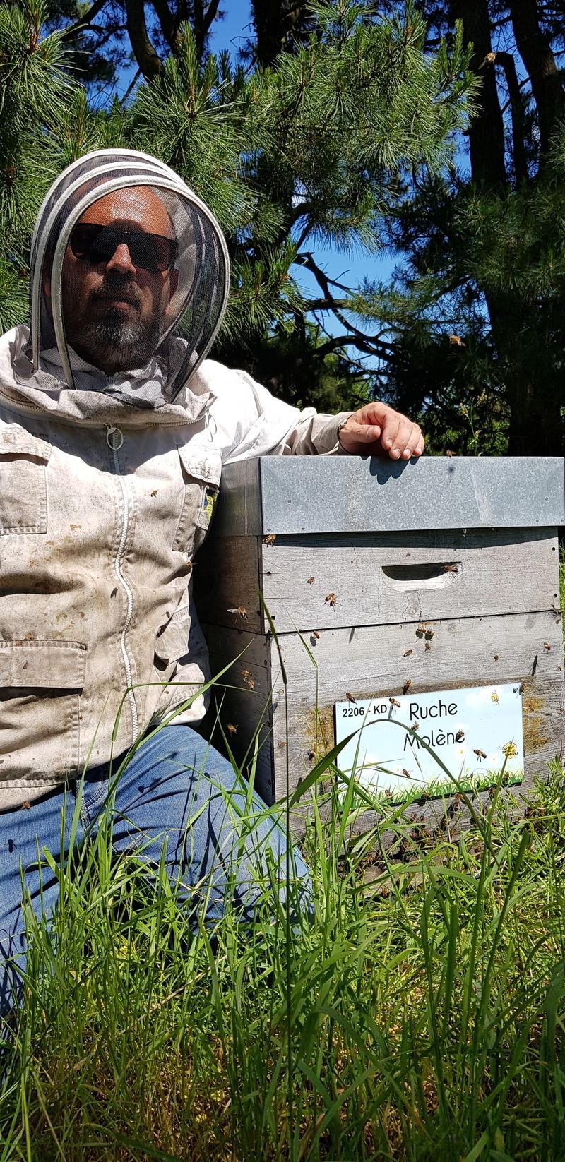 La ruche Molène