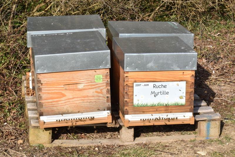 La ruche Myrtille