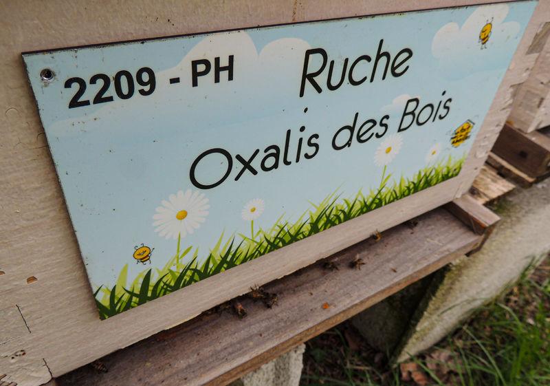 La ruche Oxalis des Bois