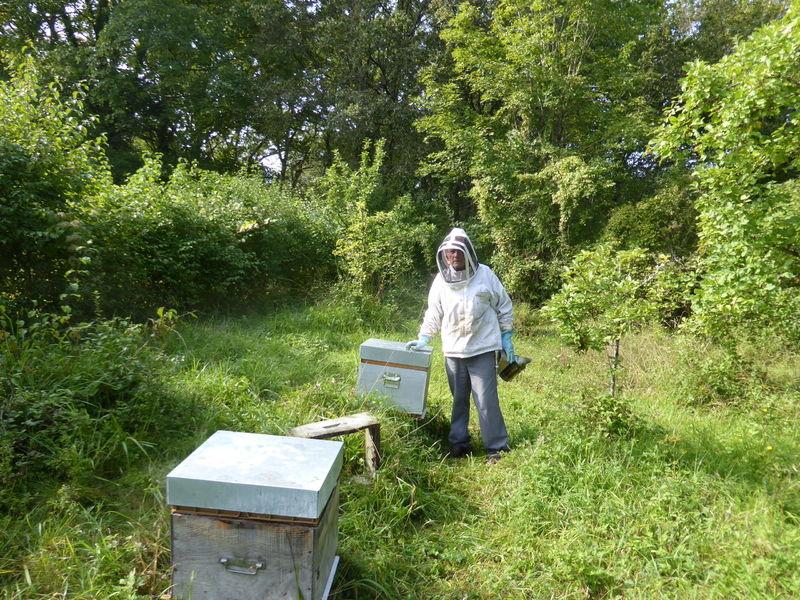 La ruche ALERION