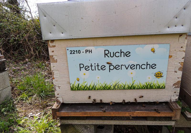 La ruche Petite pervenche